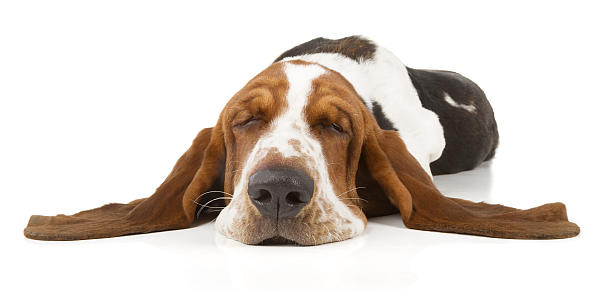 ltere hunde lebenserwartung ern hrung krankheiten. Black Bedroom Furniture Sets. Home Design Ideas