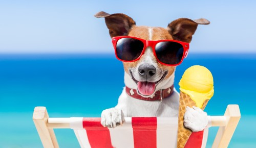 Dog Days Of Summer Ad