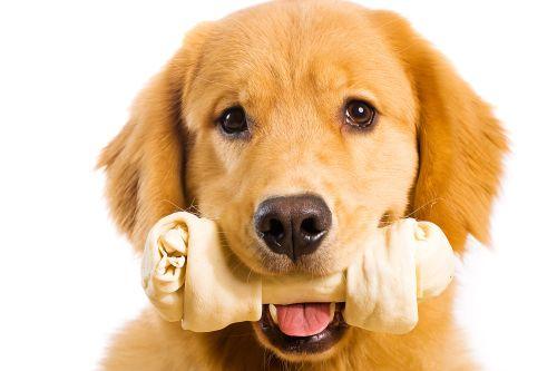 Knochen kauen - Gefahr für den Hund?