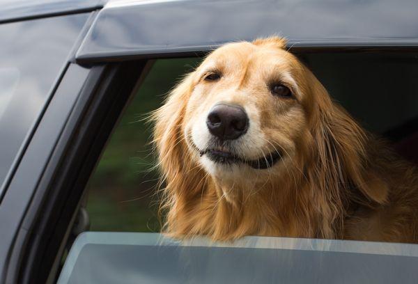 Übelkeit im Auto: Tipps gegen die Hunde-Reisekrankheit